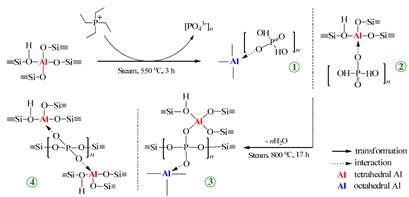 Cơ chế tương tác của P với Al trong quá trình thủy nhiệt ở các điều kiện khác nhau